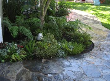 ferns and trees with flagstone pathway